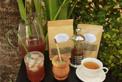 Yerba Mate - local Miami tea brand
